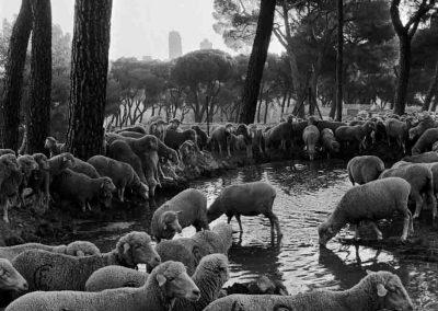 Espagne, Madrid, Parc du Retiro | septembre 1995