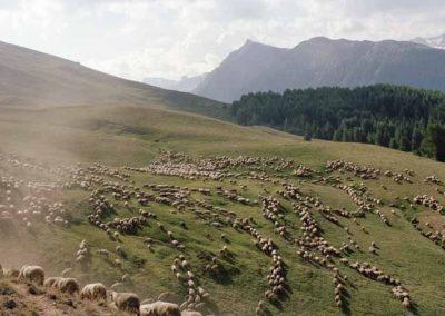 Hautes Alpes, Parc naturel régional du Queyras, col Agnel   juillet 2013