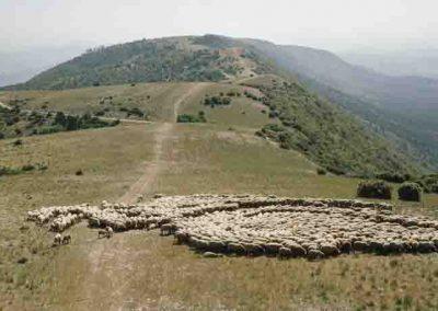 Vaucluse, parc naturel régional du Luberon   juin 2013