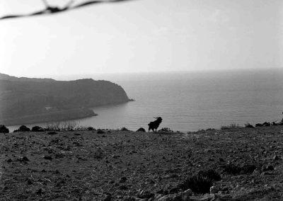 Grèce, île de Patmos, Bouc | avril 1999