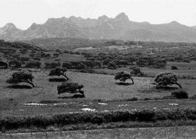 Sardaigne, route des tondeurs | mai 1996