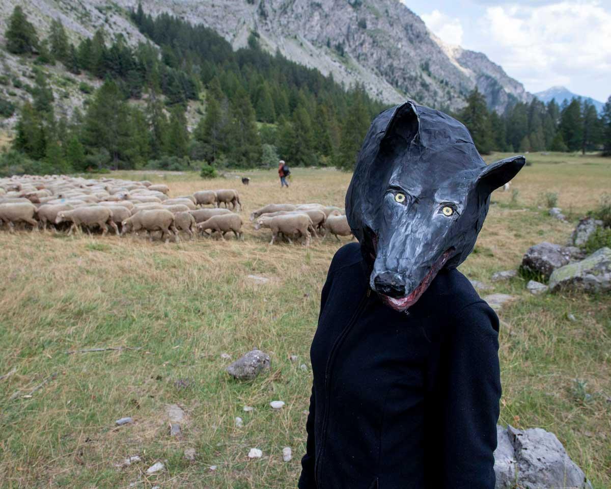 Loup troupeau ©Lionel Roux